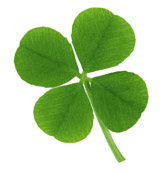 four leafed clover Louis Manzo An Irish Lullaby
